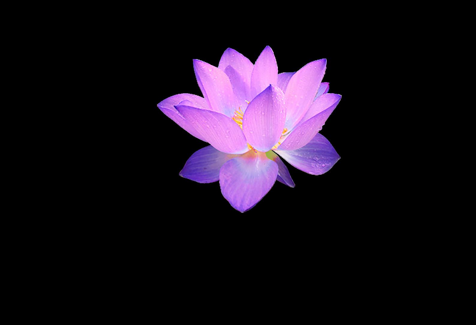 Yogastudio Karuna Retina Logo